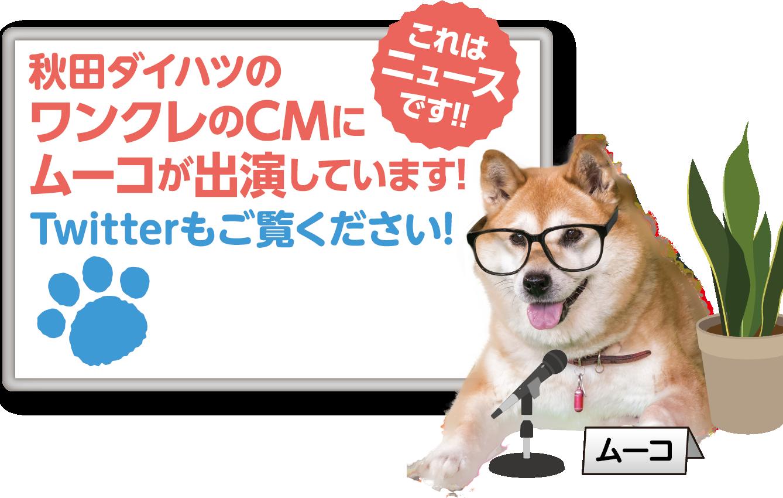 秋田ダイハツ ワンクレのCMにムーコが出演しています!
