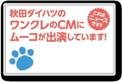 秋田ダイハツのワンクレのCMにムーコが出演しています!