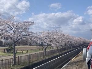 2021年桜2