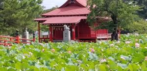 猿賀公園ハスの花画像